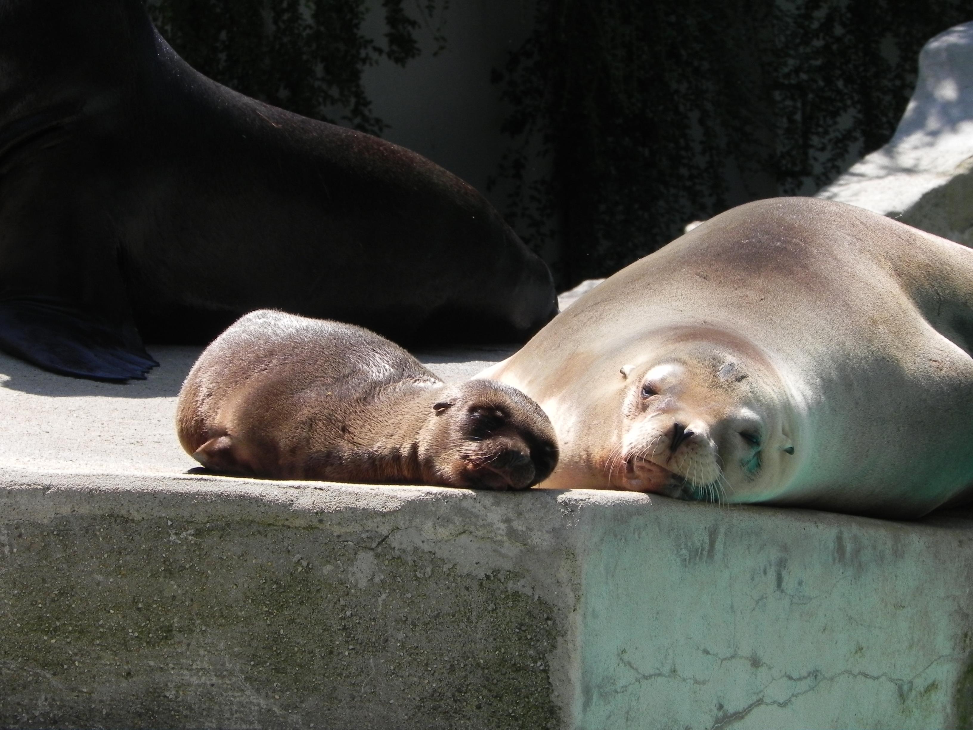 Impressionen vom Wuppertaler Zoo